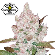 Auto Girl Scout Cookies