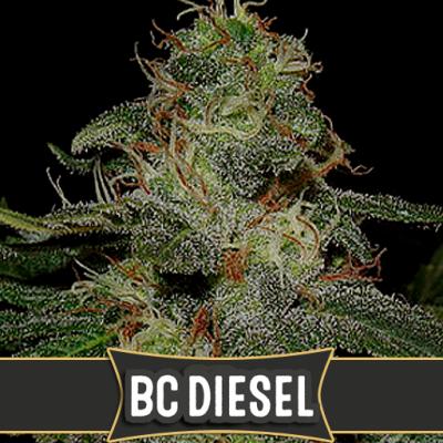 BC Diesel