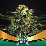 Green Tiger Faster (BSF)