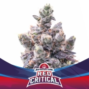 Red Critical Auto (BSF)