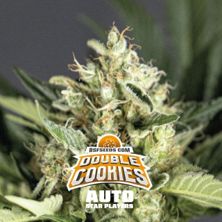 Double Cookies Auto (BSF)