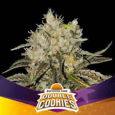 Double Cookies (BSF)