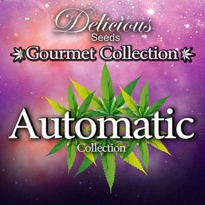 Gourmet Collection Automatik II feminisiert